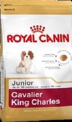 CAVALIER KING CHARLES JUNIOR 1.5KG