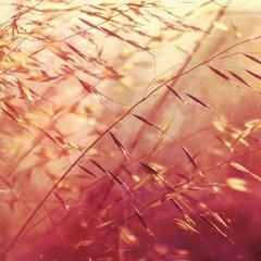 SECRET PYRAMID: Two Shadows Collide LP