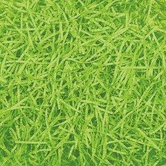 Easter Grass - Kiwi