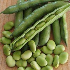 Fresh Broad Bean 2 lbs/bag 天然带壳蚕豆2磅袋