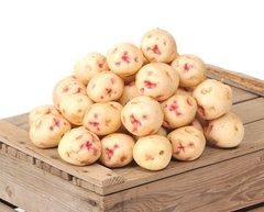Veg_Local New White Nugget potatoes 2 lbs 本地无皮新土豆2磅