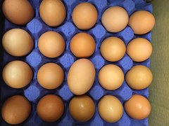 Dairy_RRF Jumbo Free Run Eggs 20 Counts Flat /RRF特大走地鸡蛋20个板
