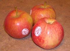 Pro.o_Local Apples Gala Organic 5lb 有机加拉苹果 5磅/袋