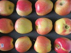 Pro_Local Apples Ambrosia 5lbs 本地Ambrosia苹果5磅