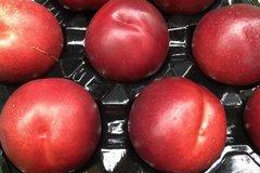 Pro_California Jumbo Red Plum 2 lbs 加州大红李子2磅袋