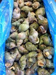 Seafood_Canadian Whelk Cooked 20 lb/box 即食加拿大大号野生翡翠螺1箱(约20磅)