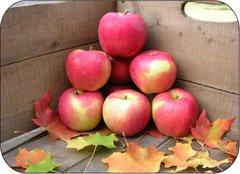 Pro.o_Local Ambrocia Apples 10lb 本地安培士苹果10磅袋