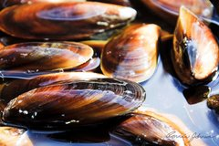 Seafood_Local Honey Mussels 5lbs 温哥华岛甜心青口5磅袋