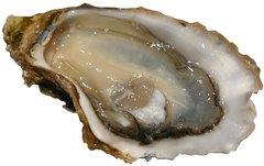 Seafood_Local Live Jumbo/Large Oyster 1 DOZEN /Box 温哥华岛鲜活大生蚝一打