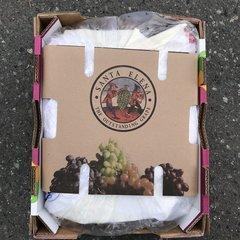 Muscate Grapes 16 lbs Box 【香甜可口、畅销品】玫瑰香葡萄16磅箱