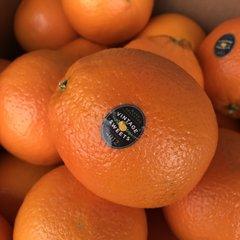 Pro_Vintage Sweet Orange Box 56pcs)/ 黑标大甜橙56颗箱