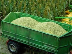 23304 Maize Crop Vehicle/Trailer Load 1:35/1:32 Scale by Juweela