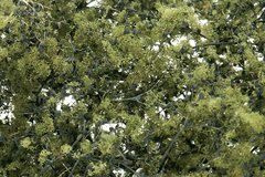 WF1133 Leaf Foliage Olive Green Sea Foam for Hedges, Trees etc by Woodland Scenics