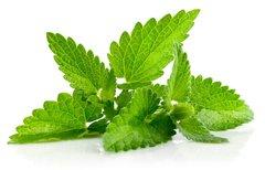 Organic Spearmint - Herbal (Tisane)