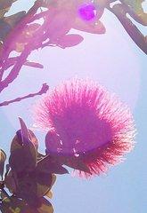 FLOWER ESSENCE INFORMATION