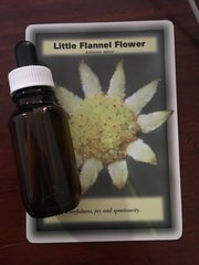 BFE - Little Flannel Flower Dosage Bottle 25ml - Playfulness, Joy, Spontaneity