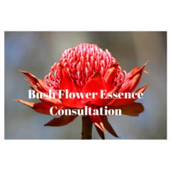 Bush Flower Essence Consultation - Initial Consultation