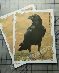 Shooting Target Crow color