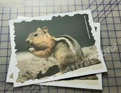 Shooting Target Chipmunk color