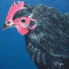 Aretha, The Black Star Chicken