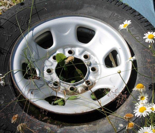 "2-8 Hole 16"" Wheels"