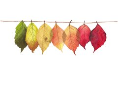 Fall leaves watercolor painting