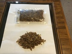 Fresh Dryed Meal Worms