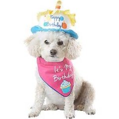 Petco 'Special Occasions' Birthday Cake Dog Hat