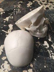 Mini Medical Human Skull Replica