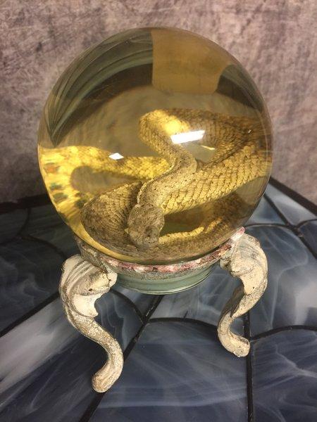 SOLD Preserved Rattlesnake Wet Specimen