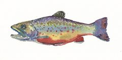 6 Printed Trout Gift Tags/Enclosures
