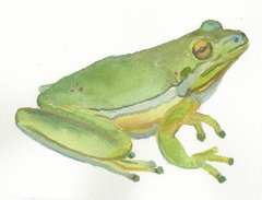 12 Printed Frog Place Cards