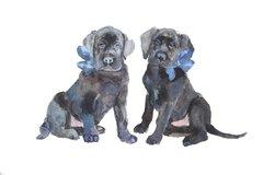 6 Printed Lab Puppies Gift Tags/Enclosures
