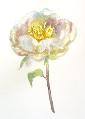 White Peony in watercolor-sold