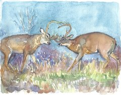 Summer Battle of the Buck