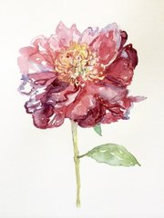 Watercolor of Peony