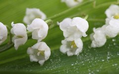108 Lily of the Valley Small Spray