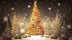 25 Christmas Tree Medium Gel