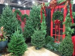 62 Scotch Pine Large Refresher Spray