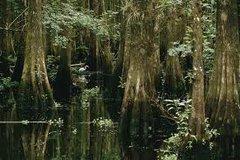 16 Cypresswood Incense Sticks