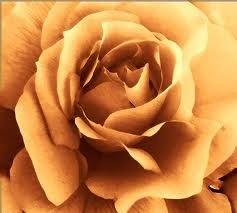 17 Amber Rose Medium Gel