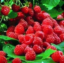 21 Raspberry Dram Oil