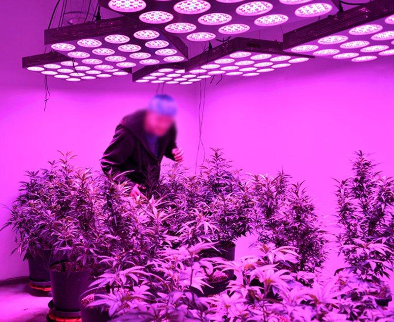 light plant new lights bars flowering grow shop lighting doctorponic design and led for