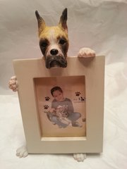 Pet Frame-Boxer