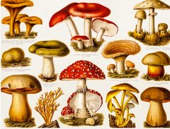 Grassland Mushrooms Postcard