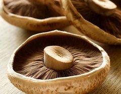 Portabella Mushroom Fruiting Kit