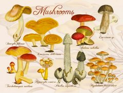 Woodland Mushrooms Postcard