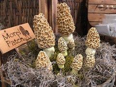 Medium Morel Mushroom