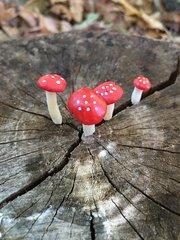 Tiny Red Amanitas