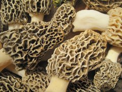 Wild Mushroom Food Safety Certification - South Carolina (Approved by SCDHEC and GADPH) - JUNE 24-25, 2017
